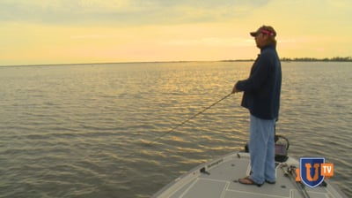 Spinnerbaits Bass Fishing Videos
